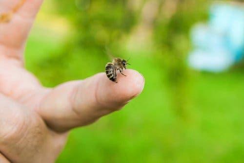 Reduce las molestias de una picadura de abeja