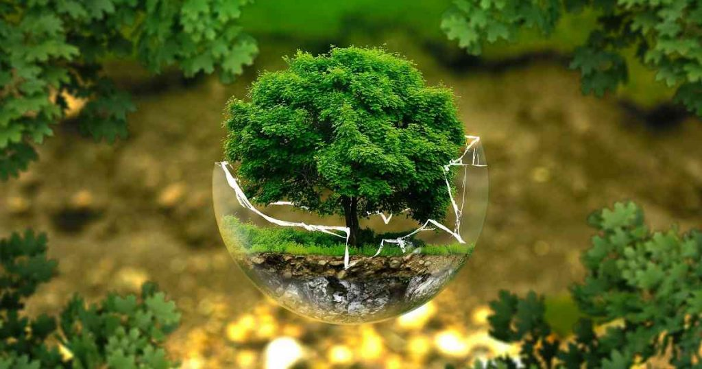 El medio ambiente y los niños